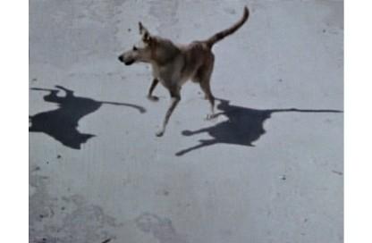 wolf-triptych-1_2